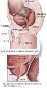 Prostata vescica vene